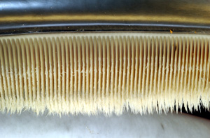Close up view on the baleen bristles, showing them tapering from the plate. They are extremely strong and durable. Photo source: Wikipedia